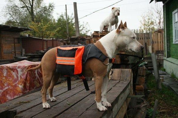 Рюкзаки для собак на заказ. Выбор рюкзака для собаки